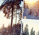 Фотокомпозиции с помощью Tych Panel.